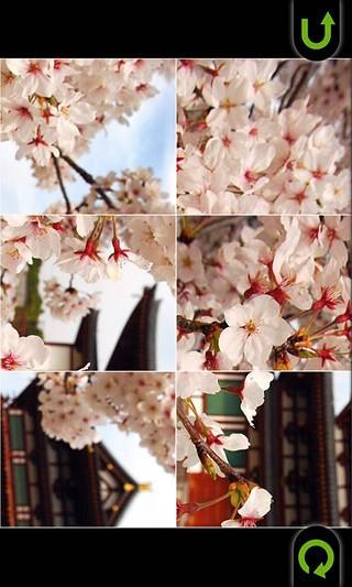 樱花拼图免费版截图(2)