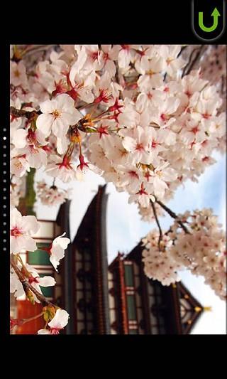 樱花拼图免费版截图(5)