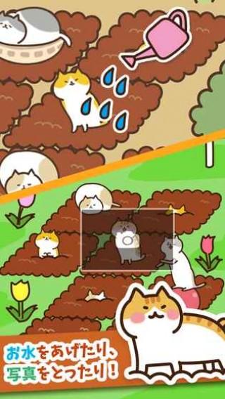猫咪田园iOS版截图(3)