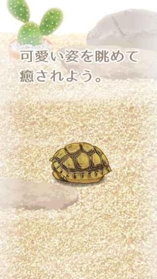 治愈的龟养成中文版截图(2)