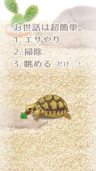 治愈的龟养成中文版截图(3)