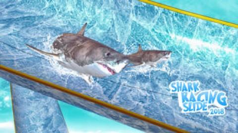 Shark Slide Racing 2018截图(1)