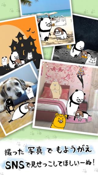 熊猫与狗狗狗一直超可爱截图(3)