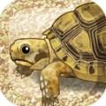 治愈的龟养成中文版