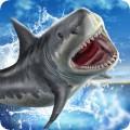 Shark Slide Racing 2018