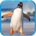 企鹅模拟器